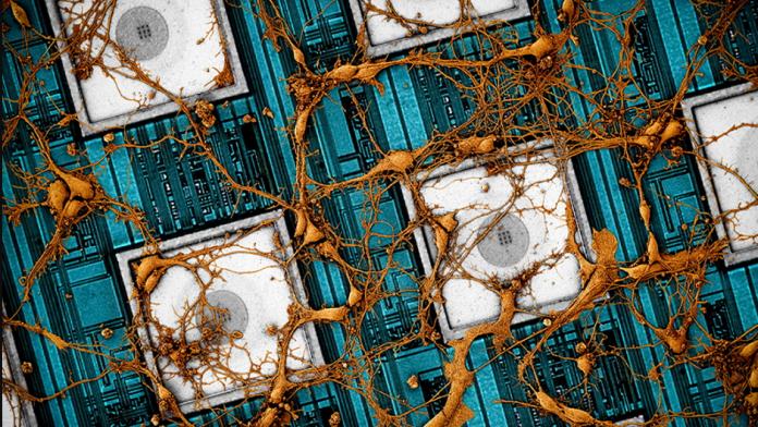 Samsung vrea sa reproduca creierul de pe cipuri sale neuromorfe